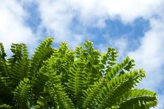 Vårträd och himmelbakgrund Royaltyfria Bilder