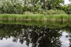 Vårträd och vasser reflekterade i floden Royaltyfri Fotografi