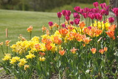 Vårträdgård Royaltyfri Foto