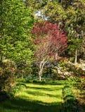Vårträdgård Arkivfoton
