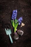 Vårträdgård - skyffel, hyacintblomma och etikett på jord Arkivbilder