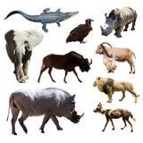 Vårtsvin och andra afrikanska djur Royaltyfria Bilder