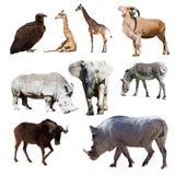 Vårtsvin och få andra afrikanska djur Arkivbild