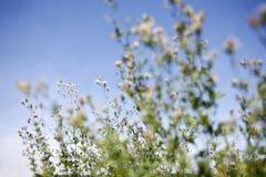 Våruppvaknande i naturen Royaltyfri Fotografi