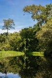 Våt afrikansk skog reflekterad i vatten (Republiken Kongo) Royaltyfria Bilder