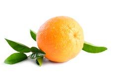 Våt apelsin med droppar på vit bakgrund Royaltyfri Fotografi