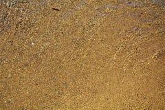 våt bakgrundssand Royaltyfri Foto