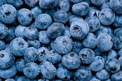 Våt blåbärbakgrund Royaltyfri Bild