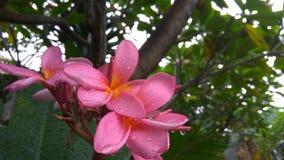 våt blomma Royaltyfri Foto