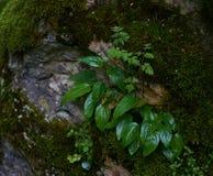 Våt buske i skog Arkivbild