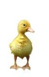 Våt duckling Royaltyfri Fotografi