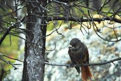 Våt fågel. Royaltyfria Foton