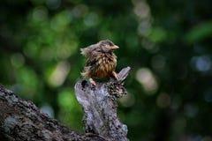våt fågel Arkivfoton