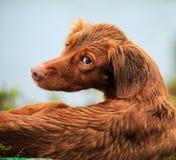Våt fågelhund Royaltyfri Bild