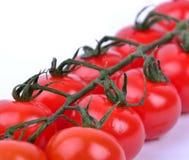 Våt filial för körsbärsröda tomater Arkivfoton