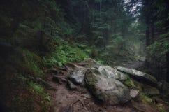 Våt gammal skog royaltyfria foton