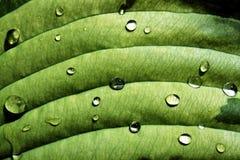 våt grön leaf Arkivfoto