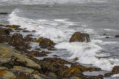 Våt havsväxt i vågorna Fotografering för Bildbyråer
