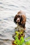 Våt hund Arkivfoton