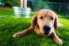 Våt hund Royaltyfria Bilder