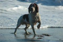 våt hund Royaltyfri Foto