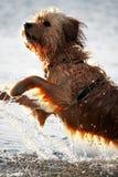 våt hund Arkivfoto