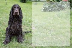 Våt hund i naturen arkivfoton