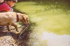 Våt hund vid sjön arkivbild