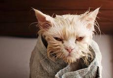 Våt katt Arkivfoto