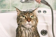 Våt katt i badet arkivfoton