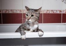 V?t katt i badrum royaltyfri bild