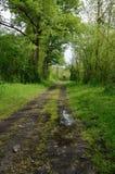 Våt landsgränd i skogen arkivbild