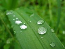 våt leaf Royaltyfri Bild