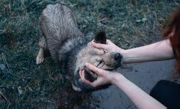 Våt liten hund som slår fotografering för bildbyråer