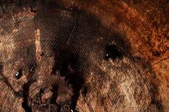 Våt mörk redwoodträdtexturbakgrund Arkivfoton