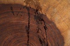 Våt mörk redwoodträdtexturbakgrund Fotografering för Bildbyråer