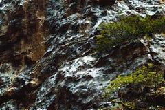 Våt muscoseyttersida i berg av Abchazien arkivbild