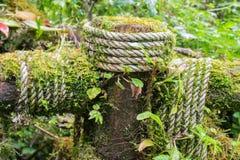 Våt rep och ormbunke på trät Arkivbilder
