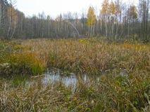 Våt sjö i skogen royaltyfria bilder