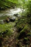 våt skog Arkivbild