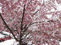 Våt snö för skurkroll och fryste blommor Arkivfoton