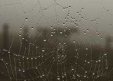 våt spindelrengöringsduk Fotografering för Bildbyråer