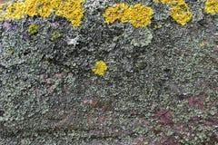 våt sten Arkivfoton