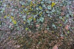 våt sten Arkivfoto
