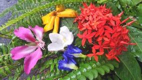Våt trädgård av naturlig färg av den tropiska blomman i den Thailand trädgården Arkivfoto
