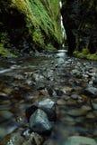 våt trail Royaltyfri Bild