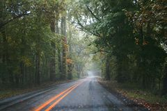 Våt väg i en skog Arkivfoton