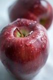 våta äpplen Royaltyfri Fotografi