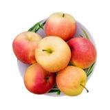 våta äpplen Fotografering för Bildbyråer