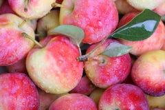 Våta äpplen Arkivfoton
